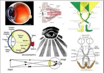 ocularcoherence