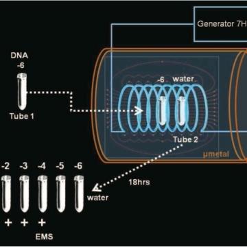 ELFDNA1